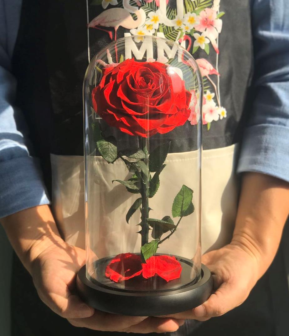 1 rose in glass dome