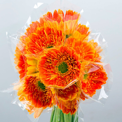 Gerbera-Golden