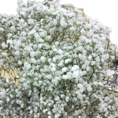 Preserved Gypsophlia-White