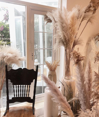 Natural Dried Flower white Pampas Grass decorations for home