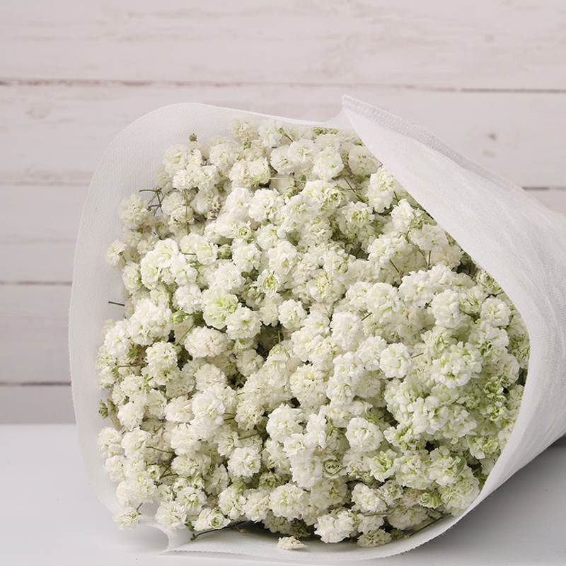 Baby breath/Gypsophlia