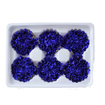 5-6 cm carnation head-blue