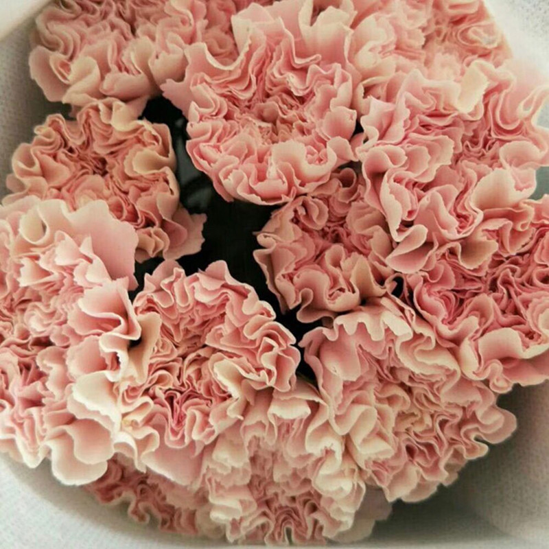 Carnation-Pearl Pink