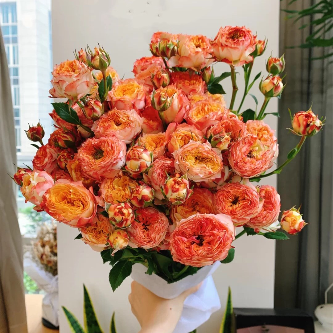 Spray Rose- Orange