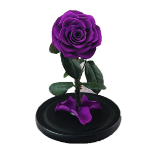 Preserved Rose in Galss Dome-Purple