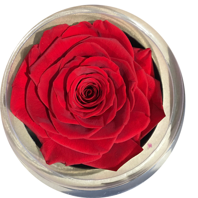 9-10 cm rose petal- red
