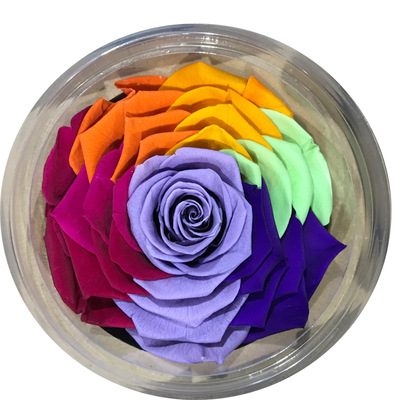 9-10 cm rose petal-rainbow color