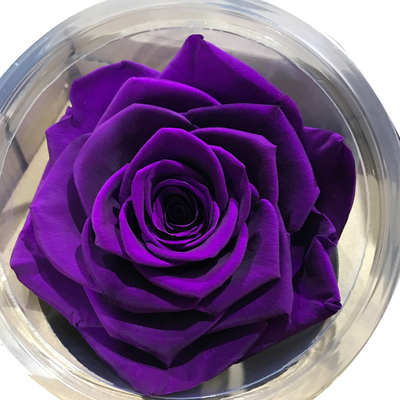 7-8 cm rose petal-purple